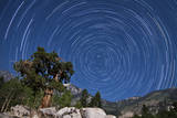 A Pine Tree on a Windswept Slope Reaches Skyward Towards North Facing Star Trails