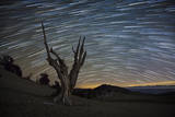 A Dead Bristlecone Pine Tree Against a Backdrop of Star Trails