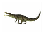 Kaprosuchus Is an Extinct Genus of Crocodile