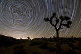 Star Trails and Joshua Trees in Joshua Tree National Park  California