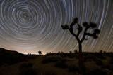 Star Trails and Joshua Trees in Joshua Tree National Park  California