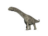 Argentinosaurus Dinosaur  White Background