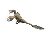 Velociraptor Mongoliensis  Late Cretaceous of Mongolia