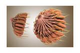 Conceptual Image of Female Breast Anatomy