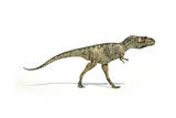 Albertosaurus Dinosaur on White Background