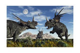 Confrontation Between Male Styracosaurus Dinosaurs