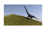 Mamenchisaurus in an Open Field