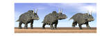 Three Nedoceratops Standing in the Desert