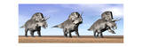 Three Zuniceratops Standing in the Desert