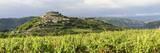 Landscape  Motovun  Istria  Croatia  Europe