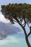 Umbrella Pine and the Amalfi Coast from Villa Rofolo in Ravello
