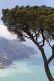Umbrella Pine and the Amalfi Coast from Villa Rofolo in Ravello