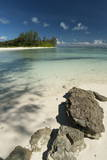 Denis Island  Seychelles  Indian Ocean  Africa