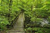 Wooden Bridge  Holzbachtal  Westerwald  Rhineland-Palatinate  Germany  Europe