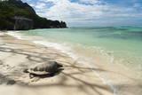 Sea Turtle  Anse Source D'Argent Beach  La Digue  Seychelles  Indian Ocean  Africa