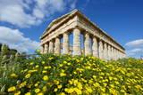 Greek Temple  Segesta  Trapani District  Sicily  Italy  Europe