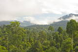 Mist Rises from Primary Rainforest at Dawn
