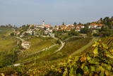 View over Treiso Village and Vineyards  Langhe  Cuneo District  Piedmont  Italy  Europe