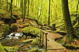 Karlstal Gorge  Near Trippstadt  Palatinate Forest  Rhineland-Palatinate  Germany  Europe