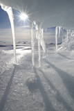 Icicles Melting in the Arctic Midnight Sun  Nunavut  Canada  North America