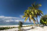 Denis Island  Seychelles  Indian Ocean  Africa