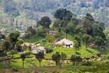 Houses on a Tea Estate in Haputale  Sri Lanka Hill Country  Sri Lanka  Asia