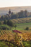Vineyards in Autumn  German Wine Route  Pfalz  Rhineland-Palatinate  Germany  Europe