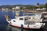 Boats in Bodrum  Anatolia  Turkey  Asia Minor  Eurasia