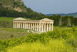 Greek Temple  Segesta  Trapani District  Sicily  Italy  Europe
