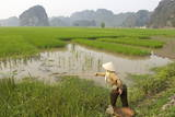 Fishing in the Rice Fields  Tam Coc  Ninh Binh Area  Vietnam  Indochina  Southeast Asia  Asia