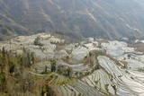 Terraced Paddy-Fields  Yuanyang  Yunnan  China  Asia