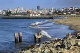 Crissy Field  San Francisco  California  United States of America  North America