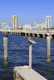 St Petersburg Skyline  Tampa  Florida  United States of America  North America