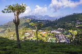 Haputale and a Tea Estate  Sri Lanka Hill Country  Nuwara Eliya District  Sri Lanka  Asia