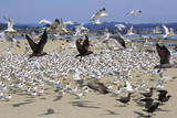 Terns and Seagulls