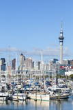 Westhaven Marina and City Skyline  Waitemata Harbour  Auckland  North Island  New Zealand  Pacific