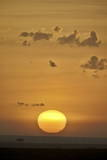 Sunrise  Serengeti National Park  Tanzania  East Africa  Africa