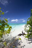 Beach on Desert Island  Maldives  Indian Ocean  Asia
