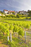Vineyards Below the Hilltop Village of Vezelay  Yonne  Burgundy  France  Europe