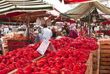 Tomatoes on Sale at the Open Air Market of Piazza Della Repubblica  Turin  Piedmont  Italy  Europe