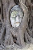 The Head of the Sandstone Buddha Image under a Bodhi Tree