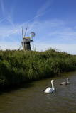 Swans in Front of St Benet's Windmill