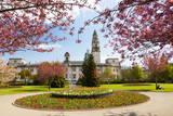 City Hall  Alexandra Gardens  Cathays Park  Cardiff  Wales  United Kingdom  Europe