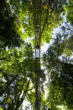A Group Takes a Guided Tour on a Canopy Walkway Through a Coastal Temperate Rainforest