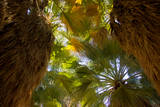 An Oasis in Joshua Tree National Park