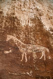 A Circa 2 Foot Wide Horse  Ute Indian  Petroglyph on a Cliff Above the San Juan River