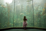 A Youngster Stands before Fronds of Giant Kelp  Two Oceans Aquarium in Cape Town