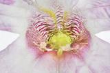 A Foxglove Flower