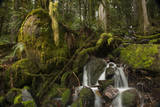 Stream Running Through a Mossy Forest  Feeding into the North Umpqua River