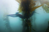 A Young Woman Freedives in the Channel Islands
